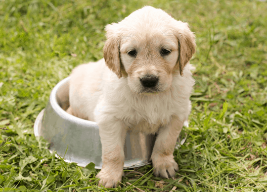 best wet puppy food uk our top picks