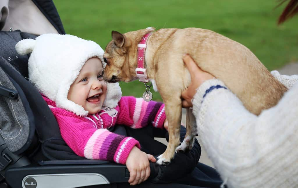 dog meets newborn