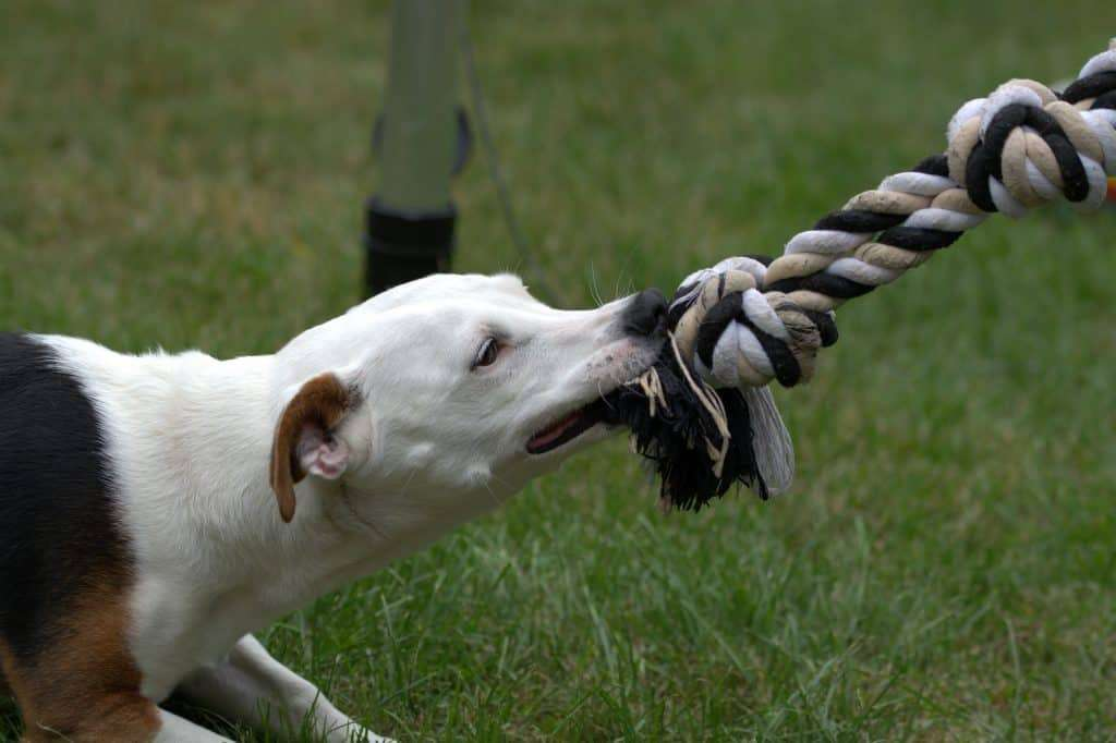dog kept busy with toy