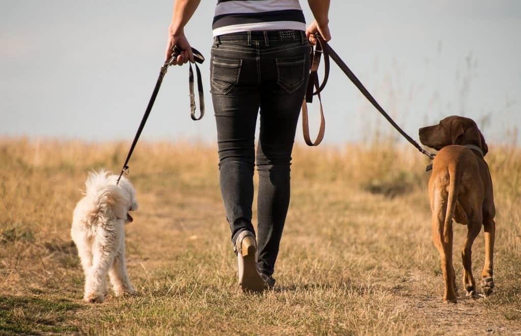 dog suddenly refuses to walk
